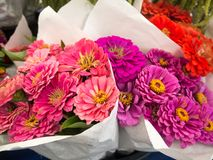 Colorful bouquets of flowers. Bright colorful bouquets of flowers at the farmers royalty free stock images