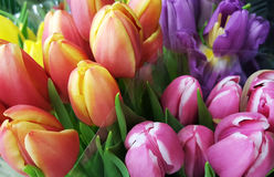 Colorful bouquets of tulips. At flower market background royalty free stock photos