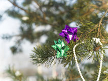Colorful Bows On Pine Tree Royalty Free Stock Photography