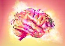 Free Colorful Brain Exploding. 3d Illustration Stock Photo - 123412120