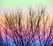 Colorful branch background Royalty Free Stock Photo