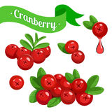 Colorful branch of Cranberry Stock Photography