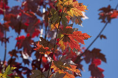 Colorful branch of leaves Stock Photos