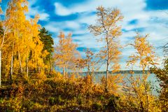 Colorful and bright autumn forest Stock Image
