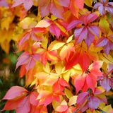 Colorful and bright autumn leaves Stock Photo