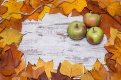 Colorful and bright autumnal background, autumn leaves, on a shabby white wooden background with three green and red apples. Autum Royalty Free Stock Image