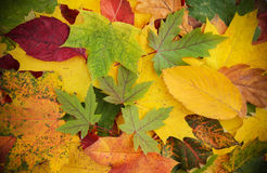 Colorful and bright background made of fallen autumn leaves Royalty Free Stock Photography