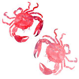 Colorful bright beautiful lovely summer sea tasty delicious two red crabs watercolor hand illustration. Royalty Free Stock Photos