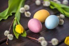 Colorful Easter eggs with yellow Tulip hand painted on a dark wooden background. Holiday spring card. Colorful bright Easter eggs with yellow Tulip hand painted Royalty Free Stock Photos