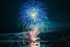 Colorful bright firework at night at summer time. royalty free stock photography