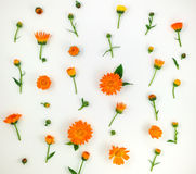 Colorful bright pattern of orange calendula flowers on white background. Flat lay Stock Photography