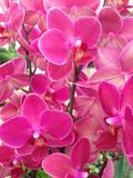 Colorful bright purple Orchid flowers Stock Images