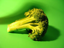 Colorful Brocolli. Bright colorful scene with a small head of brocolli stock photo
