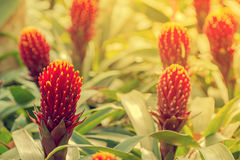 Colorful Bromeliad flowers Royalty Free Stock Photos