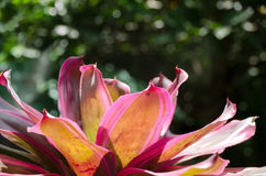 Colorful of bromeliad garden Royalty Free Stock Photography