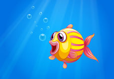 A colorful bubble fish under the sea Royalty Free Stock Image