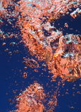 Colorful bubbles in water Stock Images