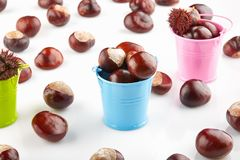 Colorful buckets with chestnuts and peeled horse-chestnuts. On white background stock photography