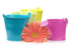 Colorful buckets, watering can and gerbera Stock Photography