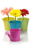Colorful buckets, watering can and gerberas Stock Photography