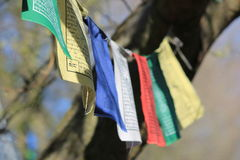 Colorful buddhism flags hanging in a tree Royalty Free Stock Photos