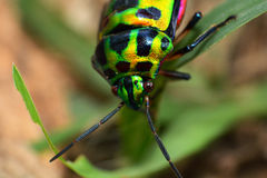 Colorful bug Royalty Free Stock Photo
