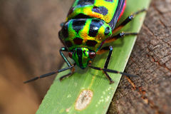 Colorful bug Stock Image
