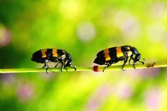 Colorful bugs Stock Photo