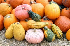 Colorful bumpy pumpkin Royalty Free Stock Images