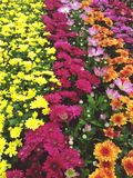 Colorful bunch of flowers Stock Photography