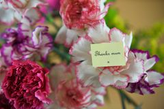 Colorful bunch of spring carnation flowers and miniature note for thank you mum. A close up macro image of a vibrant colorful bunch of carnation flowers and blur Stock Image