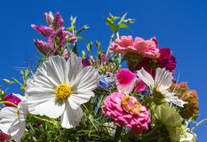 Colorful bunch of summer flowers Stock Image