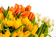 Colorful bunch of tulips spring flowers Stock Image