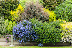 Colorful Bush Garden Royalty Free Stock Images