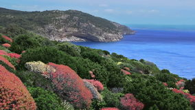 Colorful Bushes along Cave Coastline Porto Conte Sardinia Italy stock video footage