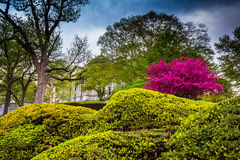 Colorful bushes and trees at the Capitol Complex in Harrisburg Royalty Free Stock Image