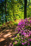 Colorful bushes in a woodland garden at the National Arboretum, Royalty Free Stock Photo