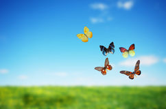 Colorful buttefly spring field stock image