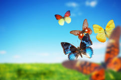 Colorful buttefly spring field royalty free stock image