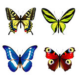 Colorful butterflies Stock Image