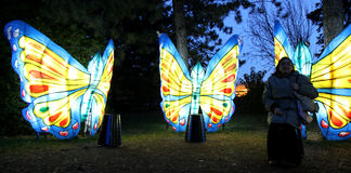 Colorful butterflies Royalty Free Stock Images