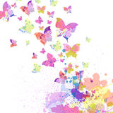 Colorful butterflies Royalty Free Stock Image