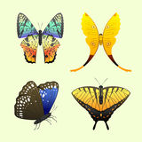 Colorful butterflies with abstract decorative pattern summer free fly present silhouette and beauty nature spring insect Royalty Free Stock Images