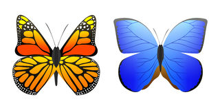 Colorful butterflies with abstract decorative pattern summer free fly present silhouette and beauty nature spring insect Royalty Free Stock Image