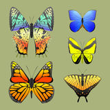 Colorful butterflies with abstract decorative pattern summer free fly present silhouette and beauty nature spring insect Stock Image