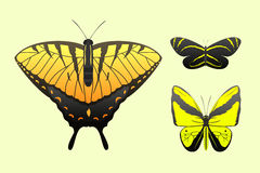 Colorful butterflies with abstract decorative pattern summer free fly present silhouette and beauty nature spring insect Stock Photos