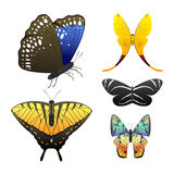 Colorful butterflies with abstract decorative pattern summer free fly present silhouette and beauty nature spring insect Stock Photography