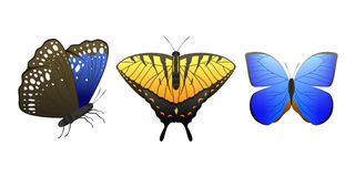 Colorful butterflies with abstract decorative pattern summer free fly present silhouette and beauty nature spring insect Stock Photo