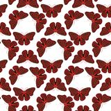 Colorful butterflies with abstract decorative seamless pattern background fly present silhouette and beauty nature Stock Image