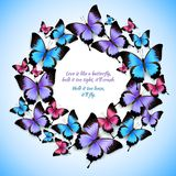 Colorful butterflies circle frame pattern Royalty Free Stock Photography